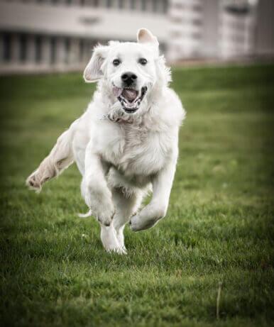 Hundefotografie Studio Galo Photography